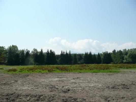 Geschottertes Grundstück mit Wald im Hintergrund